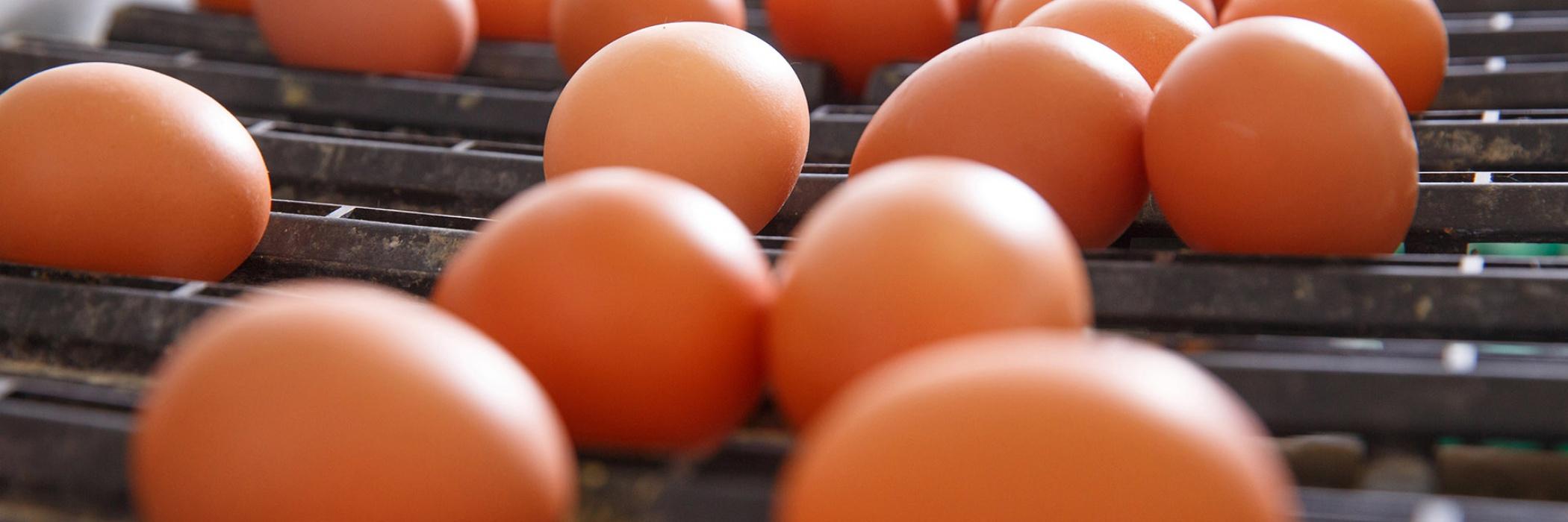 Uova su tapis roulant