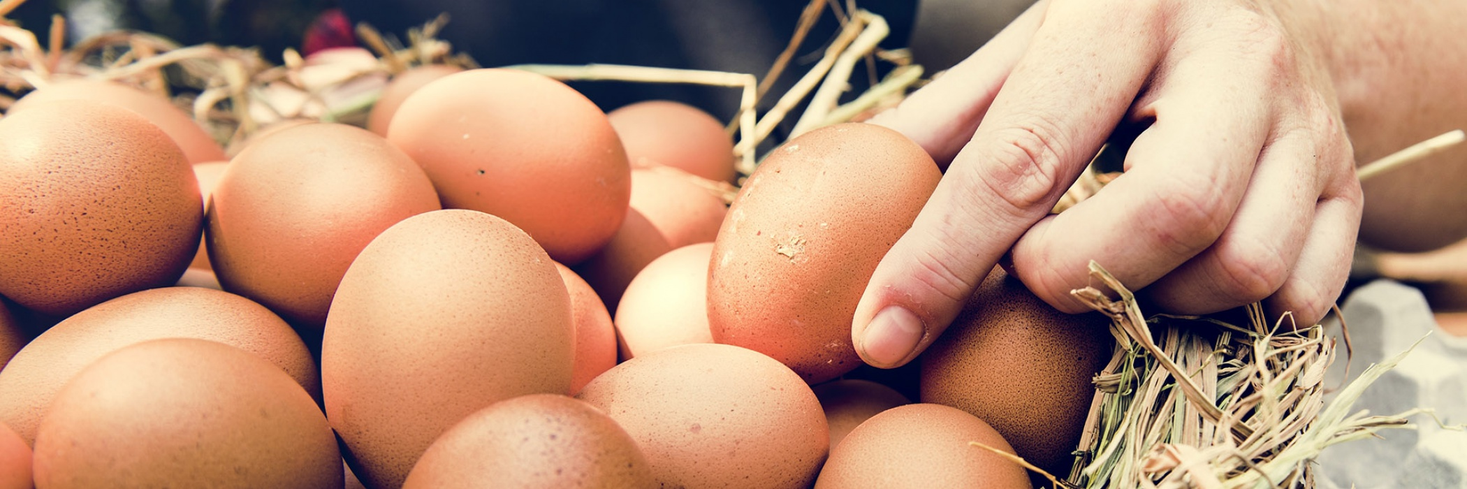 Uova nel cesto